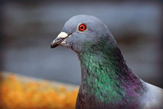 Pigeon, l'application Google pour faciliter la vie des usagers des transports en commun